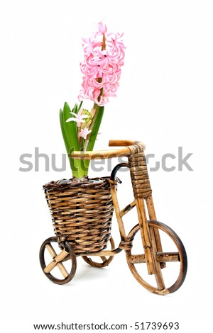 one beautiful hyacinth in flowerpot bicycle on white - stock photo