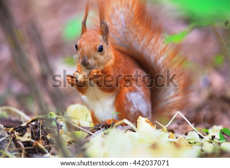 One beautiful squirrel sitting in the ground in forest. - stock photo