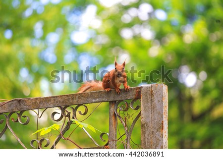 One beautiful squirrel sitting on the park fence. - stock photo