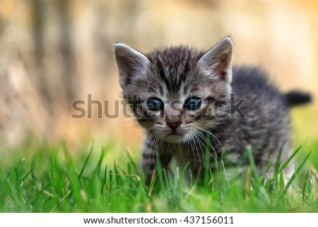 One beautiful striped kitten looking at the camera innocent look - stock photo