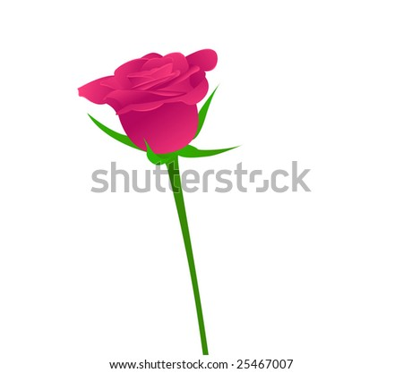 One beauty pink rose on white background.