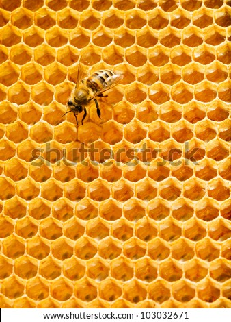 One bee on honeycomb. Loneliness worker - stock photo