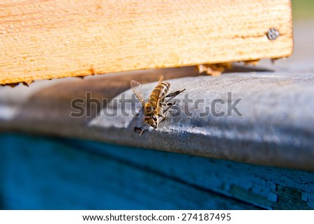 One bee on the beehive. Loneliness worker - stock photo