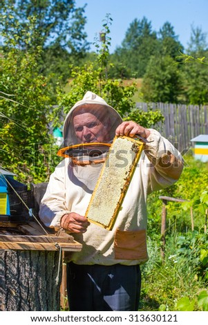 One beekeeper checks frame with worker bees on honeycomb