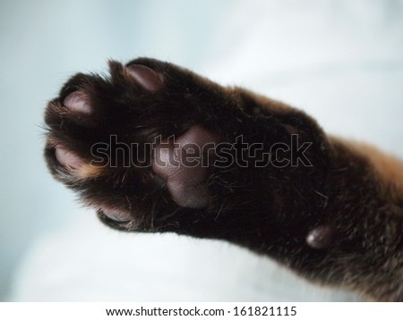 One black animal paw with slight brown coloring. - stock photo