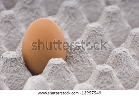 one brown egg in cardboard container - stock photo