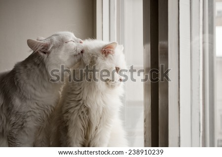 One cat grooming another cat - stock photo