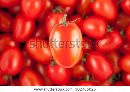 one cherry tomato with other tomatoes in the background  - stock photo