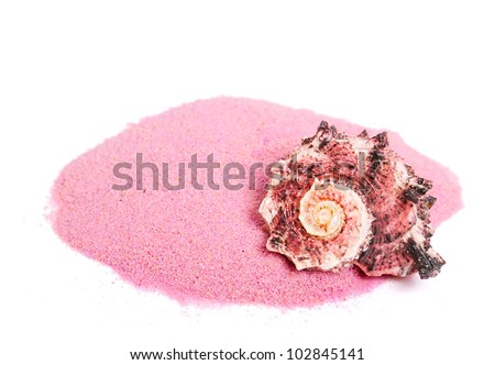 One conch sea shell on pink sand isolated on white background - stock photo