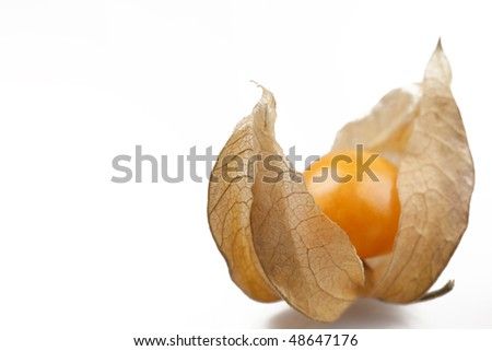 One delicate physalis. - stock photo