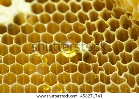 One drop of Honey on  beehive