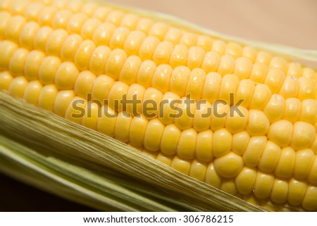 One ear of corn ripe old cloth