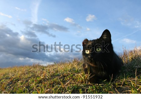 One eared cat. One eared black cat on the meadow is waiting for a pray - stock photo