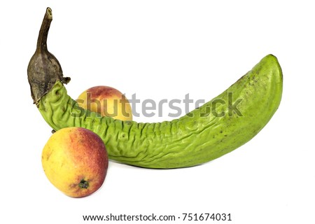 penis apple
