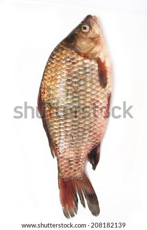 one fish carp on a white background