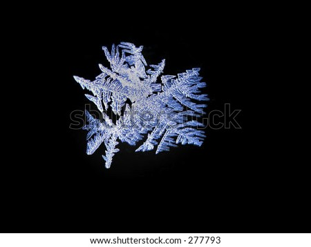 One flake of winter frost backlit and isolated on black background - stock photo