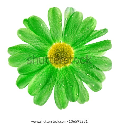 one flower head close up macro isolated on white background - stock photo