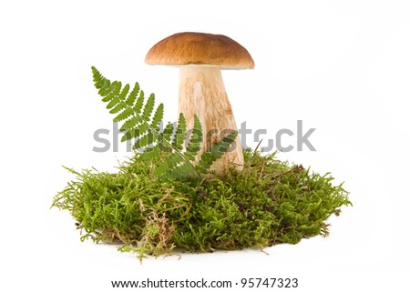 One fresh porcini mushroom in a green moss isolated on white - stock photo