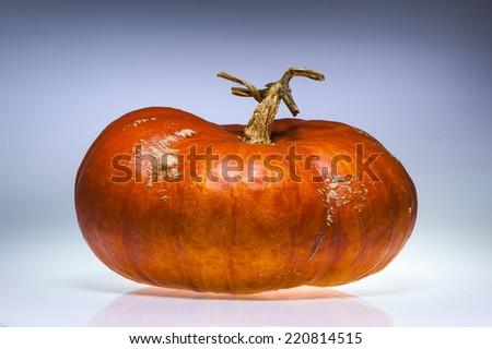 One gorgeous ripe orange pumpkin. - stock photo