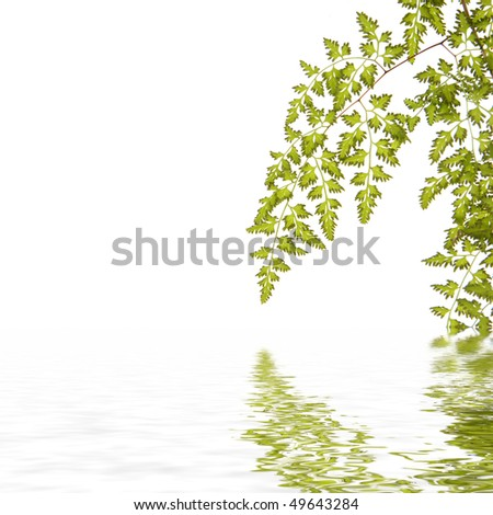 One green fern leaf with reflection in wate