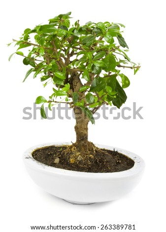 One green plant in ceramic pot isolated on white background