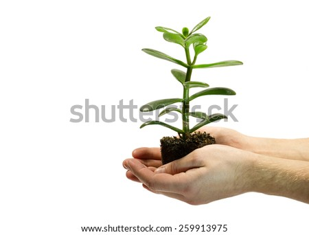 One green plant with soil in male hands isolated on white background