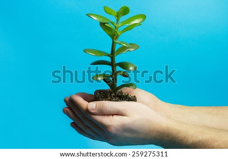 One green plant with soil in male hands on blue background - stock photo