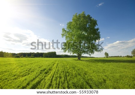 one green tree on the field and cloudy sky - stock photo
