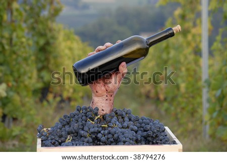 One hand holding a red wine bottle on grapes cest on vineyard background.