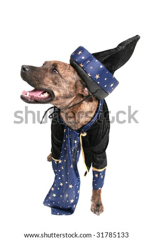 one happy wizard dog clothed over white - stock photo