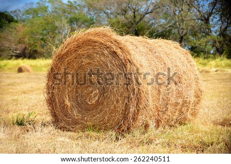 One hay bale on a pasture field with a beautiful blue sky and trees - stock photo