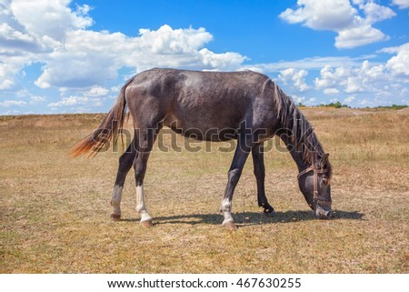 one horse grazing in the steppe