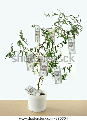One hundred dollar bills growing on tree - stock photo
