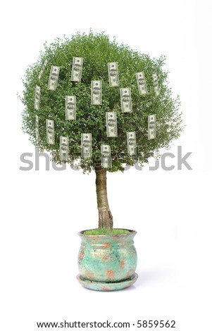 One hundred dollar pot tree over white background - stock photo