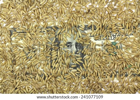 one hundred dollars banknote with grains of barley - stock photo