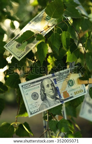 One hundred dollars bills on the tree, outdoors - stock photo