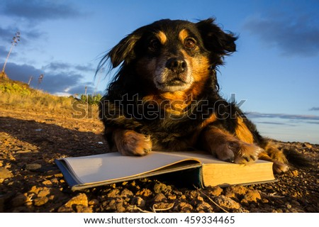 One intelligent Black Dog Reading a Book on a White Background - stock photo