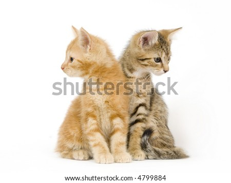 One kitten looks left while the other looks right on a white background - stock photo
