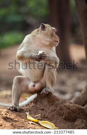 One monkey - stock photo