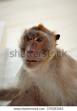 One monkey sitting on an abstract background.