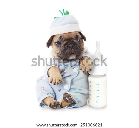 One month old French bulldog puppy with a bottle of milk  - stock photo