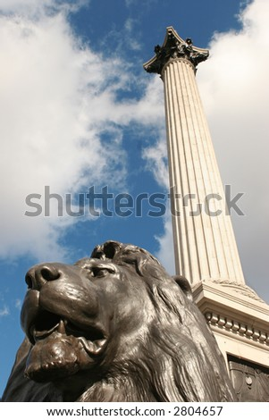 one of the lions at trafalgar square and nelson's column - stock photo