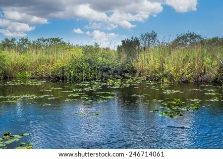 One of the many lakes in the Florida Everglades National Park - stock photo