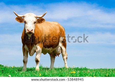 One of the slaves of the human - stock photo