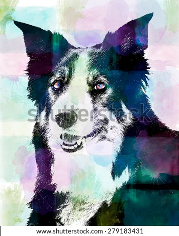 One of the smartest breeds in the world, the border collie looks at the camera ready for his job. This is a digital art piece of the favored Border Collie breed. - stock photo