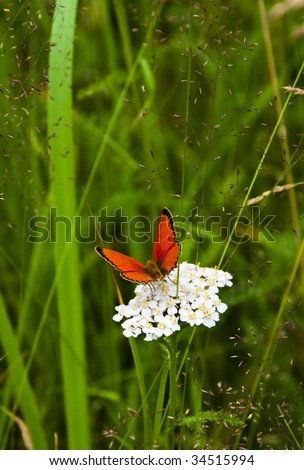 One orange butterfly on a white flower - stock photo