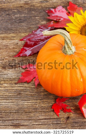 one orange pumpkin close up with red autumn leaves