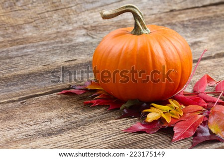 one orange pumpkin with fall leaves  on wooden textured  table - stock photo