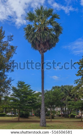 One palm trees and blue sky.