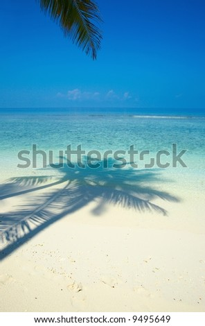 One palmtree on a beach on the island Kuredu in the Indian Ocean, Maldives - stock photo